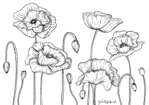 bloementekening